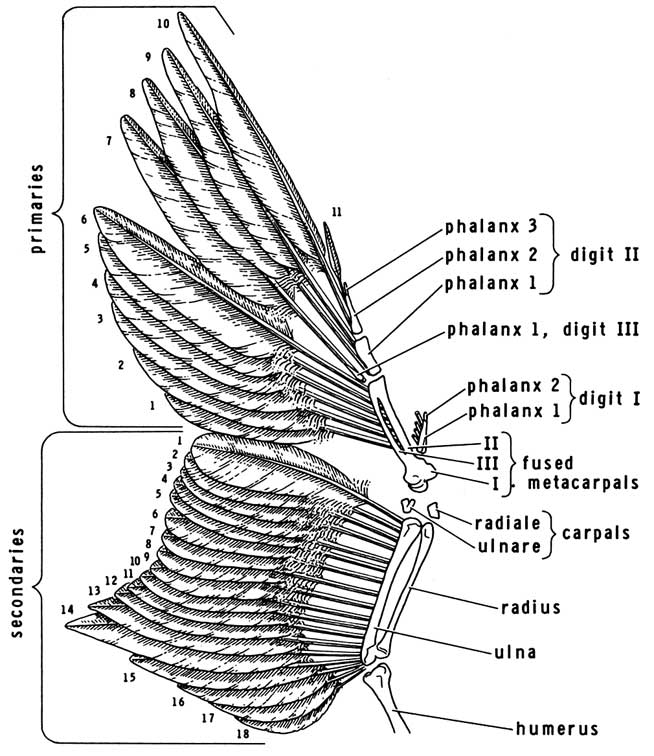 eagle wing diagram